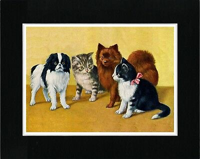 Japanese Chin And Pomeranian With Cats Dog Art Print Matted Ready To Frame