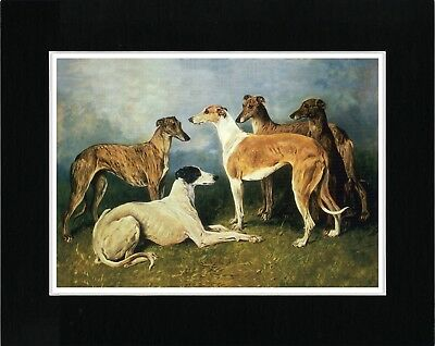Greyhound Group Of Dogs Great Vintage Style Dog Print Matted Ready To Frame