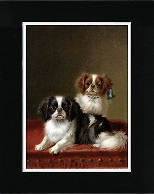Japanese Chin Little Dogs On A Table Lovely Vintage Style Dog Print Ready Matted