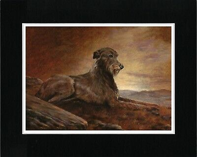 Irish Wolfhound On Hillside At Dawn Lovely Vintage Style Dog Print Ready Matted