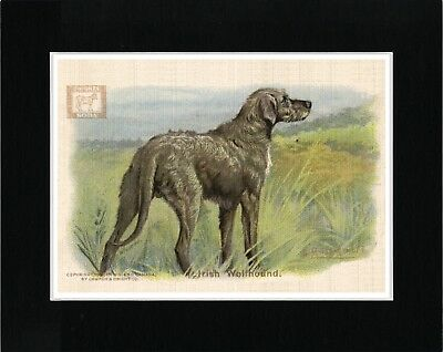 IRISH WOLFHOUND ON A HILLSIDE AT DAWN LOVELY DOG PRINT MOUNTED READY TO FRAME