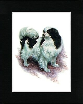 Japanese Chin Lovely Dog Art Print Matted Ready To Frame