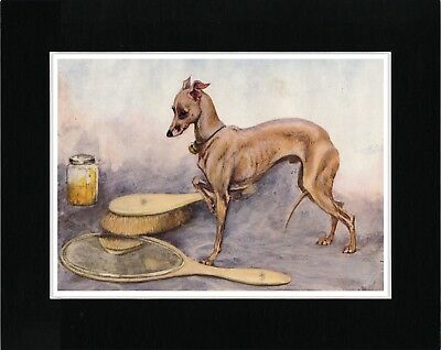Italian Greyhound Charming Image Vintage Style Dog Art Print Ready Matted