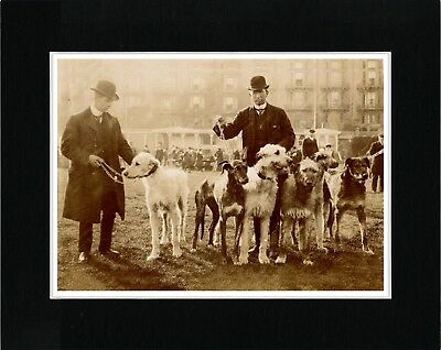 Irish Wolfhound Men And Dogs At A Show Vintage Style Dog Print Ready Matted