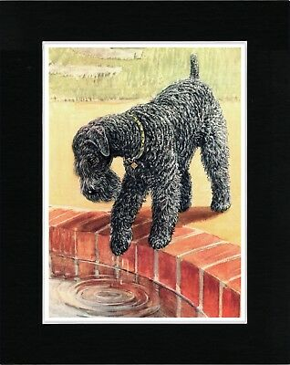 Kerry Blue Terrier Looking In Pond Vintage Style Dog Art Print Ready Matted