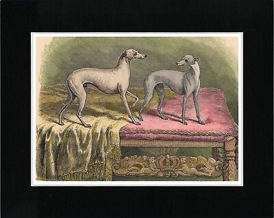 Italian Greyhound Two Little Dogs Lovely Vintage Style Dog Print Ready Matted