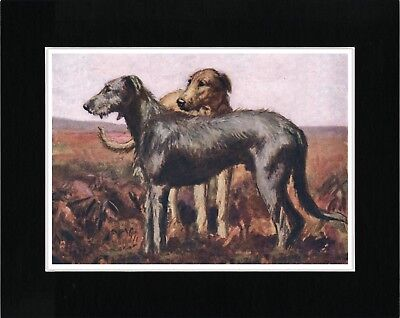 Irish Wolfhound Dogs In Moorland Setting Vintage Style Dog Print Ready Matted