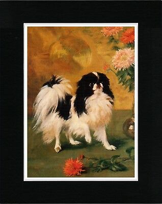Japanese Chin And Chrysanthemums Lovely Dog Art Print Matted Ready To Frame