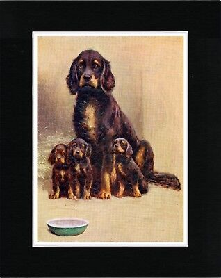 Gordon Setter Mother And Puppies Lovely Vintage Style Dog Print Ready Matted