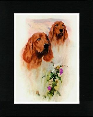 Irish Setter Head Study Two Dogs Vintage Style Dog Print Matted Ready To Frame