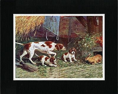 Pointer Mother And Pups Lovely Vintage Style Dog Art Print Ready Matted