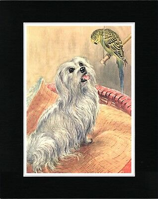Maltese And A Parrot Lovely Vintage Style Dog Art Print Matted Ready To Frame