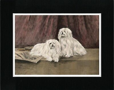 Maltese Two Dogs Vintage Style Dog Art Print Matted Ready To Frame