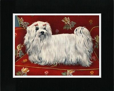 Maltese On A Red Seat Lovely Vintage Style Dog Art Print Matted Ready To Frame