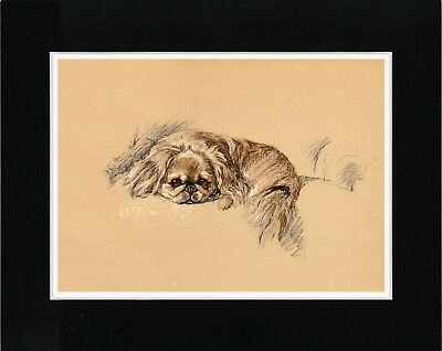 Pekingese Asleep On A Chair Lovely Vintage Style Dog Art Print Ready Matted