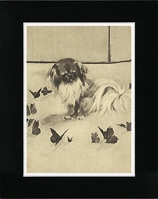 Pekingese Surrounded By Butterflies Vintage Style Dog Art Print Ready Matted