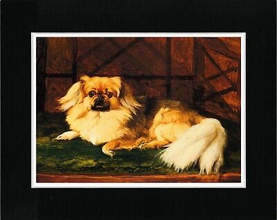 Pekingese At Rest Charming Vintage Style Dog Art Print Matted Ready To Frame