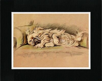Pekingese Fast Asleep On A Chair Lovely Vintage Style Dog Art Print Ready Matted