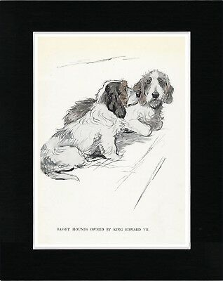 Petit Basset Griffon Vendeen Dogs Great Vintage Style Dog Art Print Ready Matted