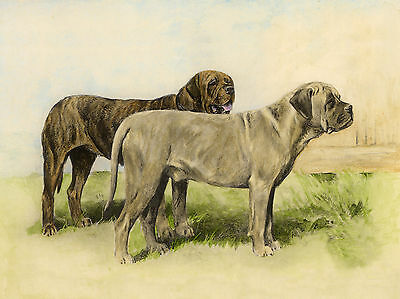 MASTIFF LOVELY DOG GREETINGS NOTE CARD