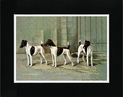 Smooth Fox Terrier Named Dogs Lovely Vintage Style Dog Art Print Ready Matted