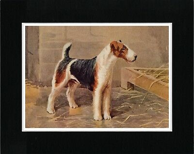 Wire Fox Terrier In Kennel Vintage Style Dog Print Matted Ready To Frame