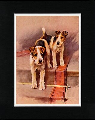 Wire Fox Terrier Dogs On Staircase Vintage Style Dog Print Matted Ready To Frame