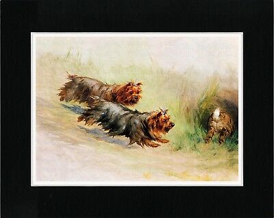 Yorkshire Terrier Dogs Chase Rabbit Lovely Old Style Dog Art Print Ready Matted
