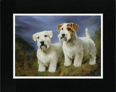 Sealyham Terrier Dogs Lovely Vintage Style Dog Art Print Matted Ready To Frame