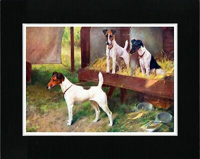 Smooth Fox Terrier Dogs At A Show Vintage Style Dog Art Print Matted