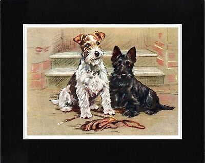 Wire Fox And Scottish Terrier Dogs Lovely Vintage Style Dog Print Ready Matted