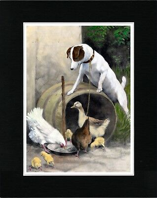 Smooth Fox Terrier Hens Chicks And Duck Vintage Style Dog Art Print Matted