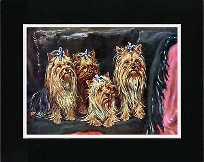 Yorkshire Terrier Group Of Dogs Old Style Dog Art Print Ready Matted