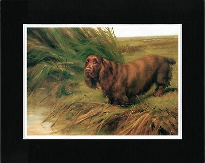 Sussex Spaniel On River Bank Vintage Style Dog Art Print Ready Matted