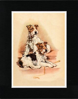 Wire Fox Terrier Dogs Lovely Vintage Style Dog Print Matted Ready To Frame