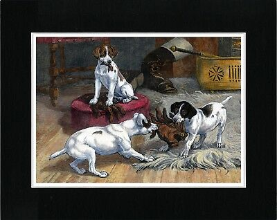 Smooth Fox Terrier Pups Tug Of War With Glove Vintage Style Dog Art Print Matted