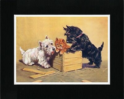 SCOTTISH WESTIE AND CAIRN TERRIER DOGS VINTAGE STYLE DOG ART PRINT READY MATTED