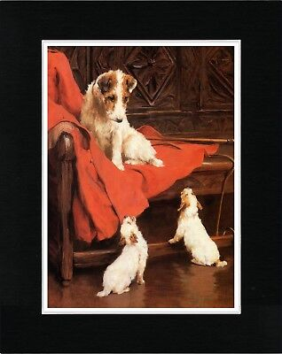 Wire Fox Jack Russell Terrier And Puppies Vintage Style Dog Print Ready Matted