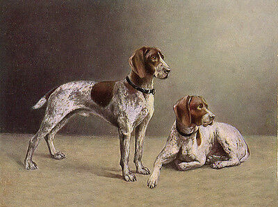 German Shorthaired Pointer Two Dogs Lovely Dog Greetings Note Card