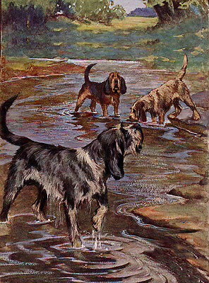 Otterhound Charming Dog Greetings Note Card, Beautiful Dogs In Rural Setting