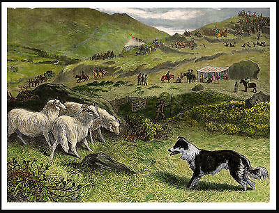 Border Collie Herding Sheep At Trials Lovely Vintage Style Dog Art Print Poster