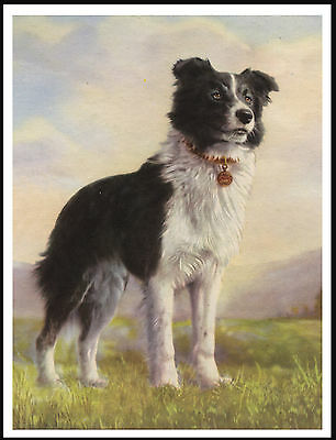 Border Collie Lovely Image Of A Standing Dog Vintage Style Dog Print Poster