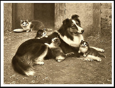 Border Collie And Kittens Lovely Vintage Style Dog Art Print Poster