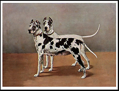 Great Dane Two Dogs Lovely Vintage Style Dog Art Print Poster