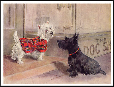 Westie West Highland White In Tartan Coat And Scottish Terrier Dog Print Poster
