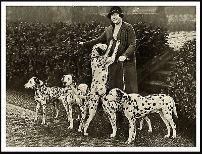 Lady And Her Dalmatian Dogs Lovely Vintage Style Dog Photo Print Poster