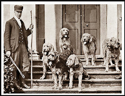 Otterhound Pack And Huntmaster Lovely Vintage Image Dog Print Poster