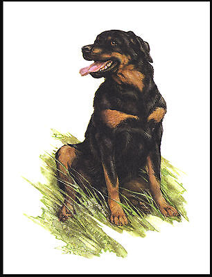 Rottweiler Happy Seated Dog Lovely Dog Art Print Poster