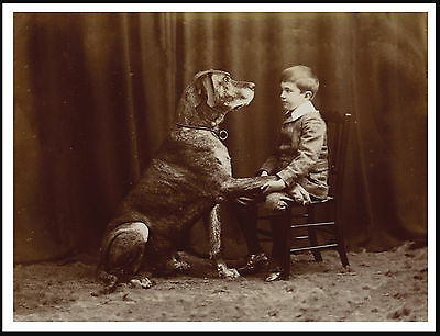 Great Dane Big Dog And Small Boy Great Vintage Style Dog Photo Print Poster