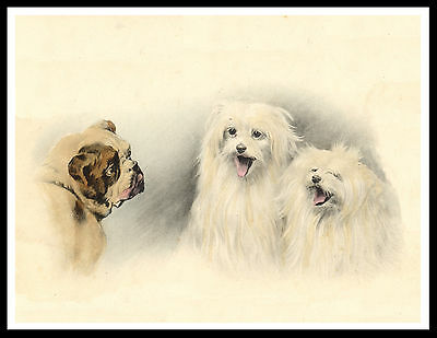 Maltese Dogs Laughing At Bulldog Charming Vintage Style Dog Art Print Poster